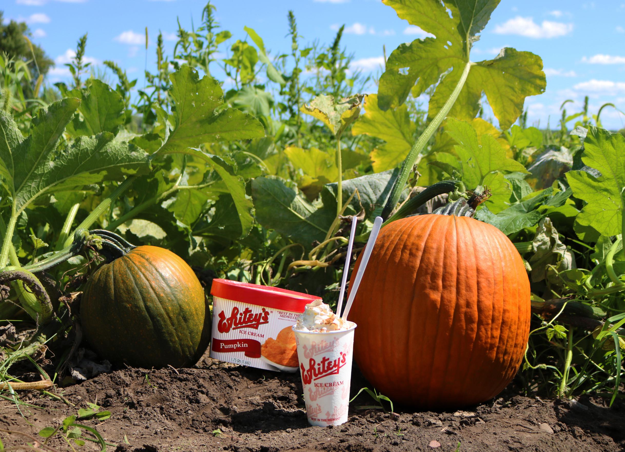 Pumpkin Patch - FULL